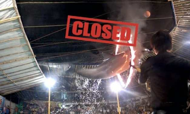 Indonesia Has Officially Banned Traveling Dolphin Circus Shows