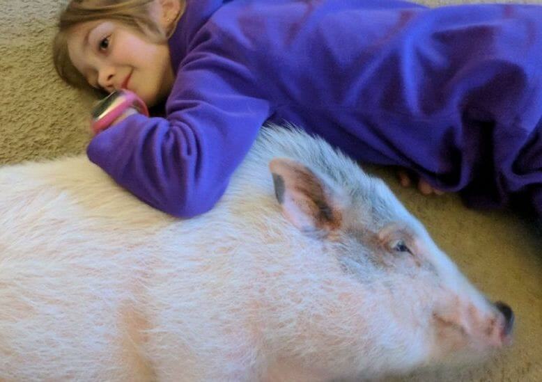 This 9-Year-Old Girl Is Saving Abandoned Potbelly Pigs