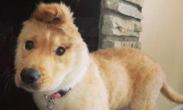 Adorable 'Unicorn Dog' Embraces Her Unique Look