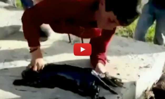 VIDEO: Boy Risks His Life to Save Puppy from Oil Well
