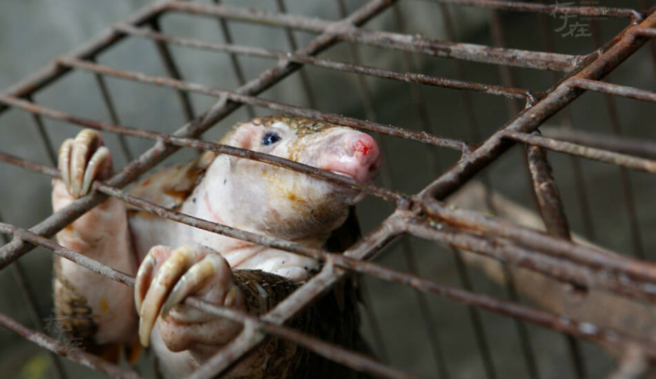 SIGN: Pass Vietnam's Proposed Ban On the Cruel Wildlife Trade