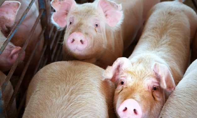 5 Deadly Diseases Linked to the Meat and Dairy Industries