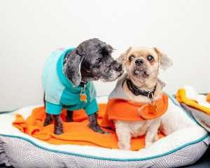 rescue dogs best friends ny