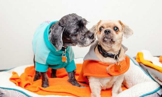 New York City Pet Adoptions on the Rise Amid Coronavirus Pandemic