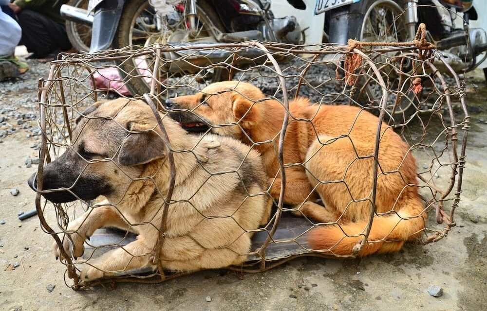 SIGN: End Horrific Live Animal Markets Worldwide