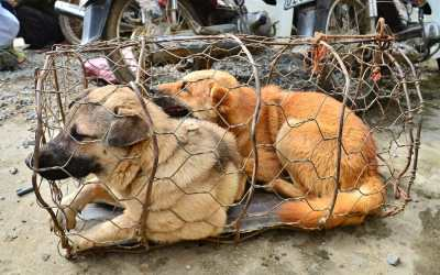 SIGN: Call to End Horrific Live Animal Markets Worldwide