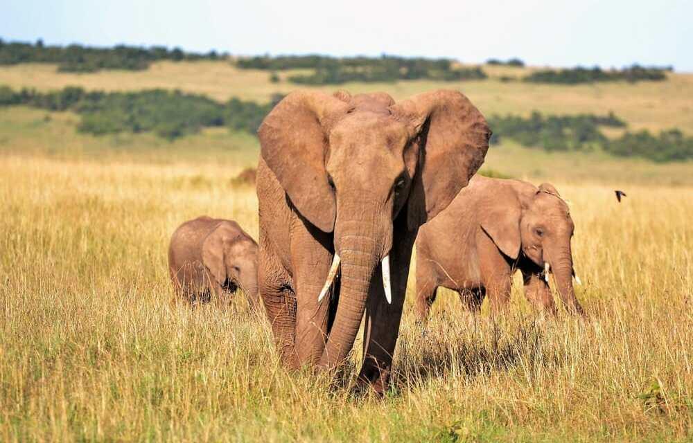 Washington D.C. Proposes Ban on Elephant Ivory and Rhino Horns