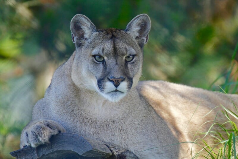 SIGN: Stop Terrible Plan to Open Up Wildlife Refuges to Hunters