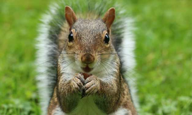 People Are Building Mini Picnic Tables for Squirrels During Coronavirus Lock Down