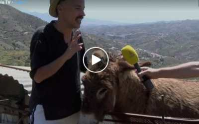 man reuniting with donkey