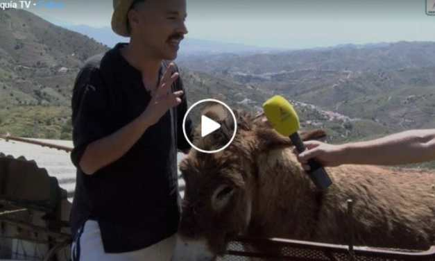 VIDEO: Teary Reunion of A Man And His Donkey After Quarantine Will Warm Your Spirit