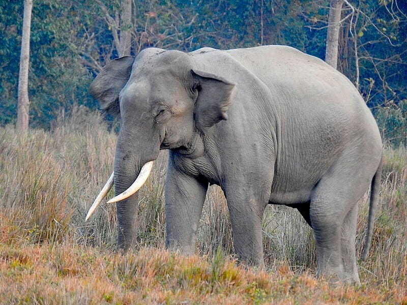 Cambodia Adopts First-Ever Plan to Save Elephants from Extinction