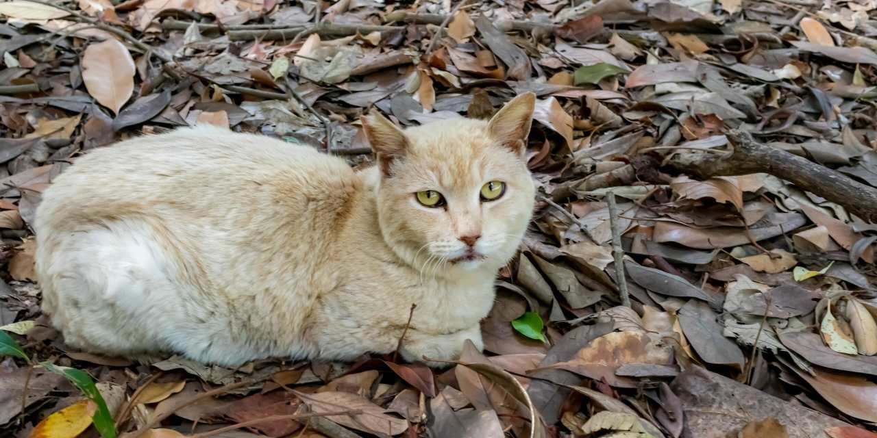 SIGN: Justice for Cats Poisoned to Death on Japan's Famous 'Cat Island'