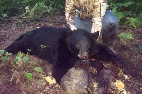SIGN: Stop Hunters from Shooting Helpless Bear Cubs In Their Own Dens