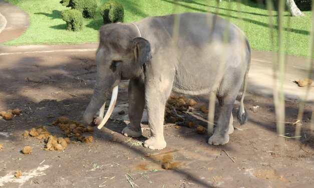 SIGN: Stop Cruel Elephant Rides at Mason Elephant Park