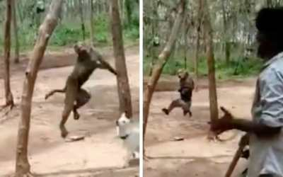 monkey hanged from tree