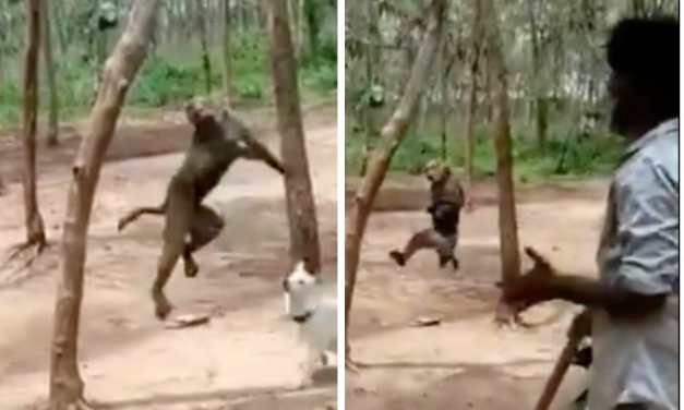 SIGN: Justice for Monkey Hanged from Tree in Viral Video