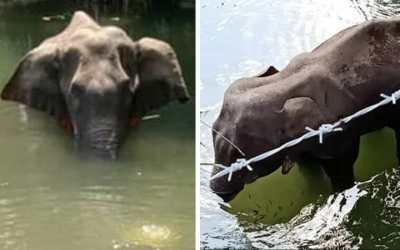 SIGN: Justice for Pregnant Elephant Fed Pineapple Full of Explosives