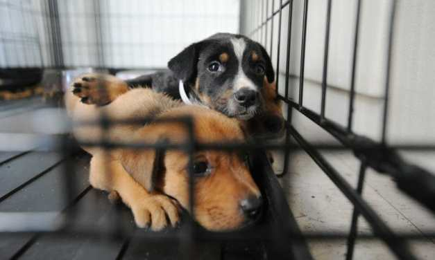 SIGN: Stop Scammers Passing Off Puppy Mill Dogs As Rescues
