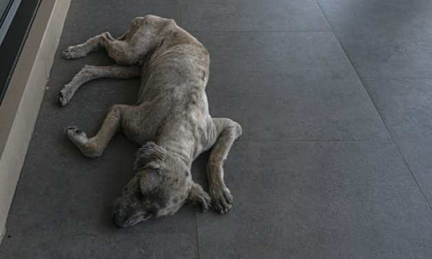 SIGN: Justice for Dogs Adopted From Shelter and Starved to Death