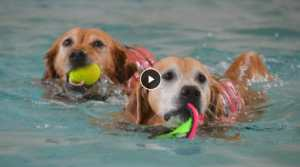 senior dogs swimming