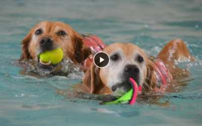 senior dogs swimming