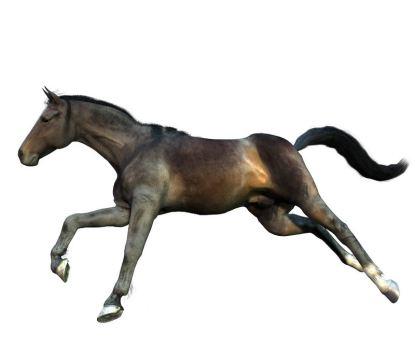 Karina   Bay thoroughbred mare