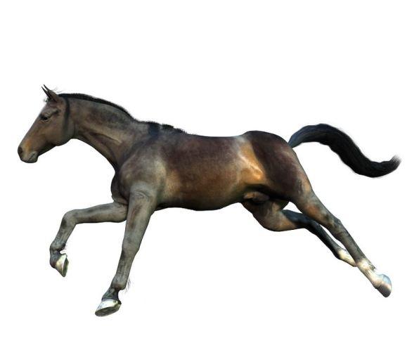 Karina | Bay thoroughbred mare