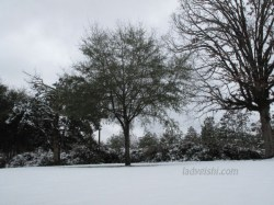 snow in Louisiana