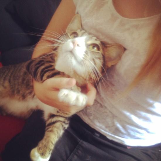 alt-chat-cat-picture-petsitting