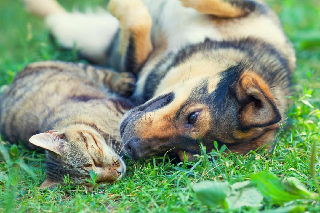 alt-association-sauvade-chien-chat-adopter-un-animal