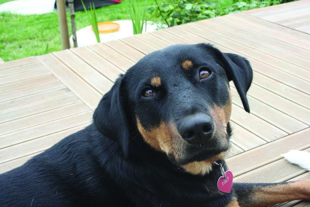 alt-association-sauvade-chien