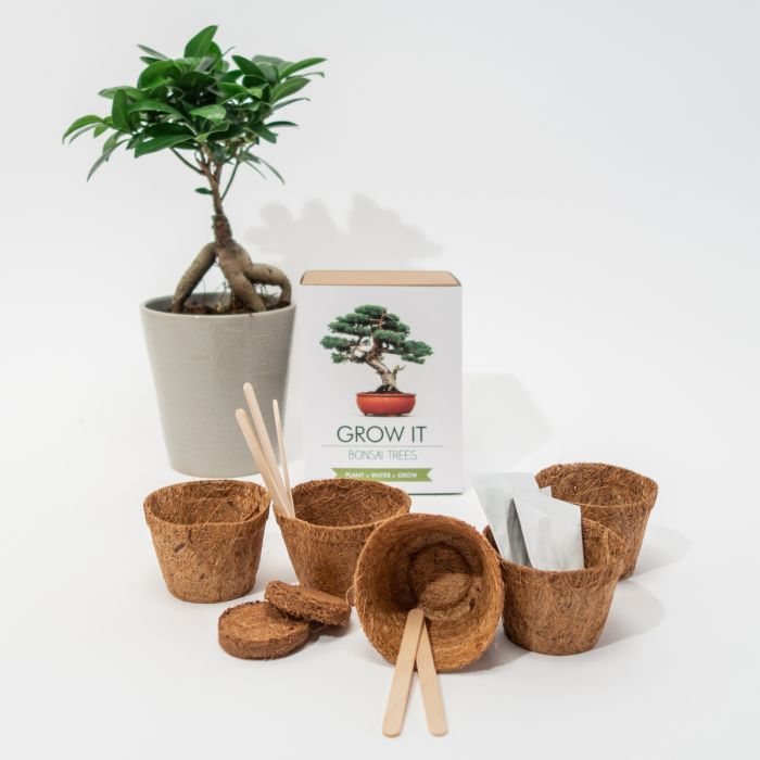 alt-kit-grow-it-bonsai-cadeaux-folies