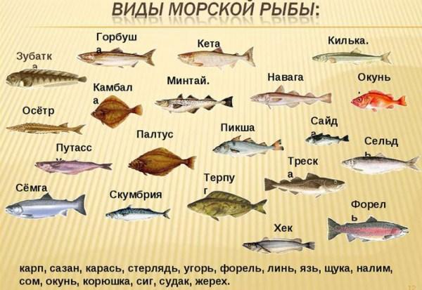 Морские Рыбы Картинки С Названиями