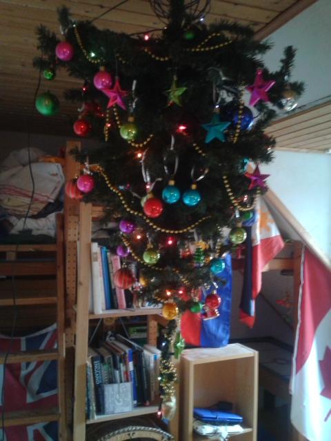 tree 014