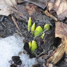 garden-03-08-15-058