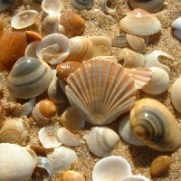 Poetry Prompts Day 28 – OctPoWriMo 2016 – Sea Shells