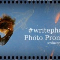 Photo prompt round up – Swan #writephoto