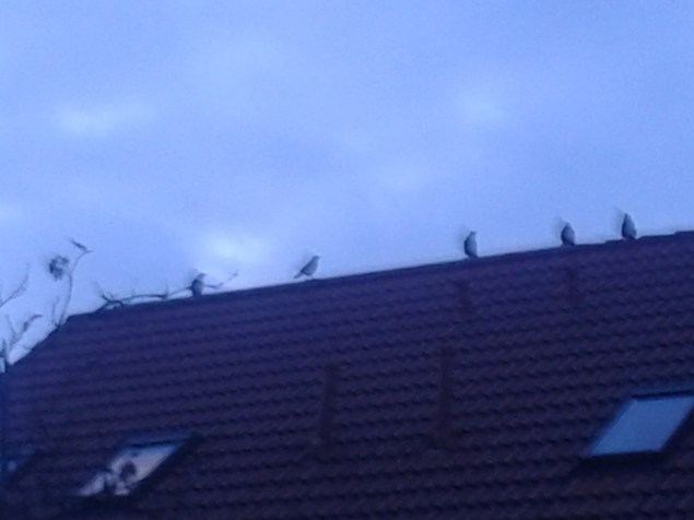took a photo of the birds this morning, on our way to the pool