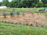 blackacre-community-garden