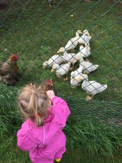 Feeding the ducks and hens at Newgrange Farm