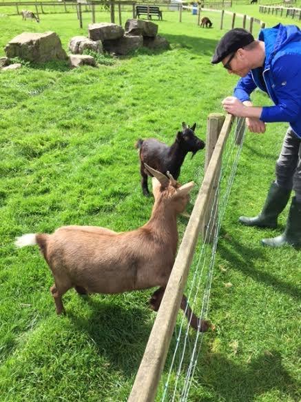 Feeding the goats at Newgrange Farm