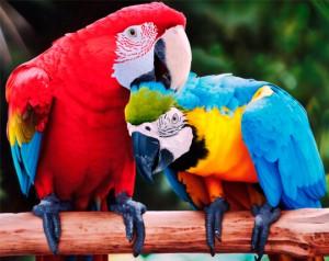 Выбираем красивое имя для попугая-мальчика: необычные и ...