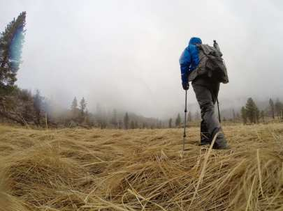 Wet walk through the meadow