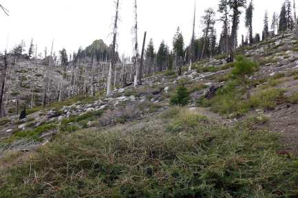 Route up to Taylor Dome