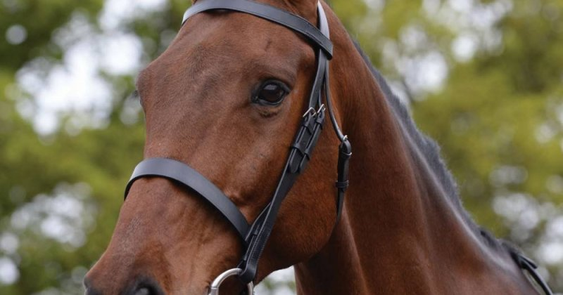Bridles – Do You Know The Different Types?