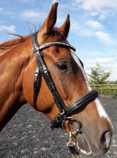 Chestnut horse wearing a black snaffle bridle