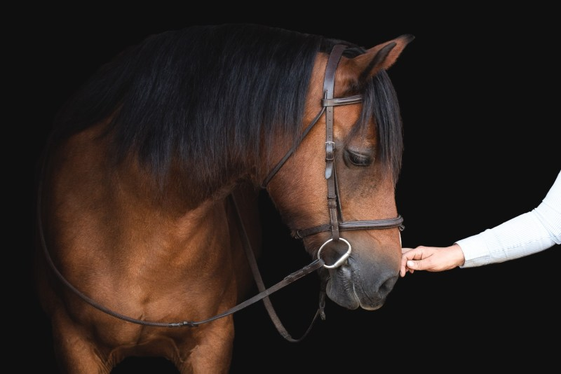 Bay pony in a snaffle bridle