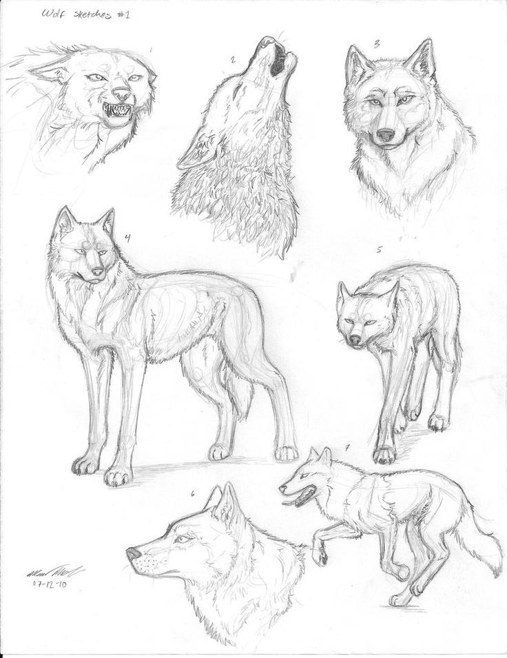 рисунки поэтапно животные волк сделал