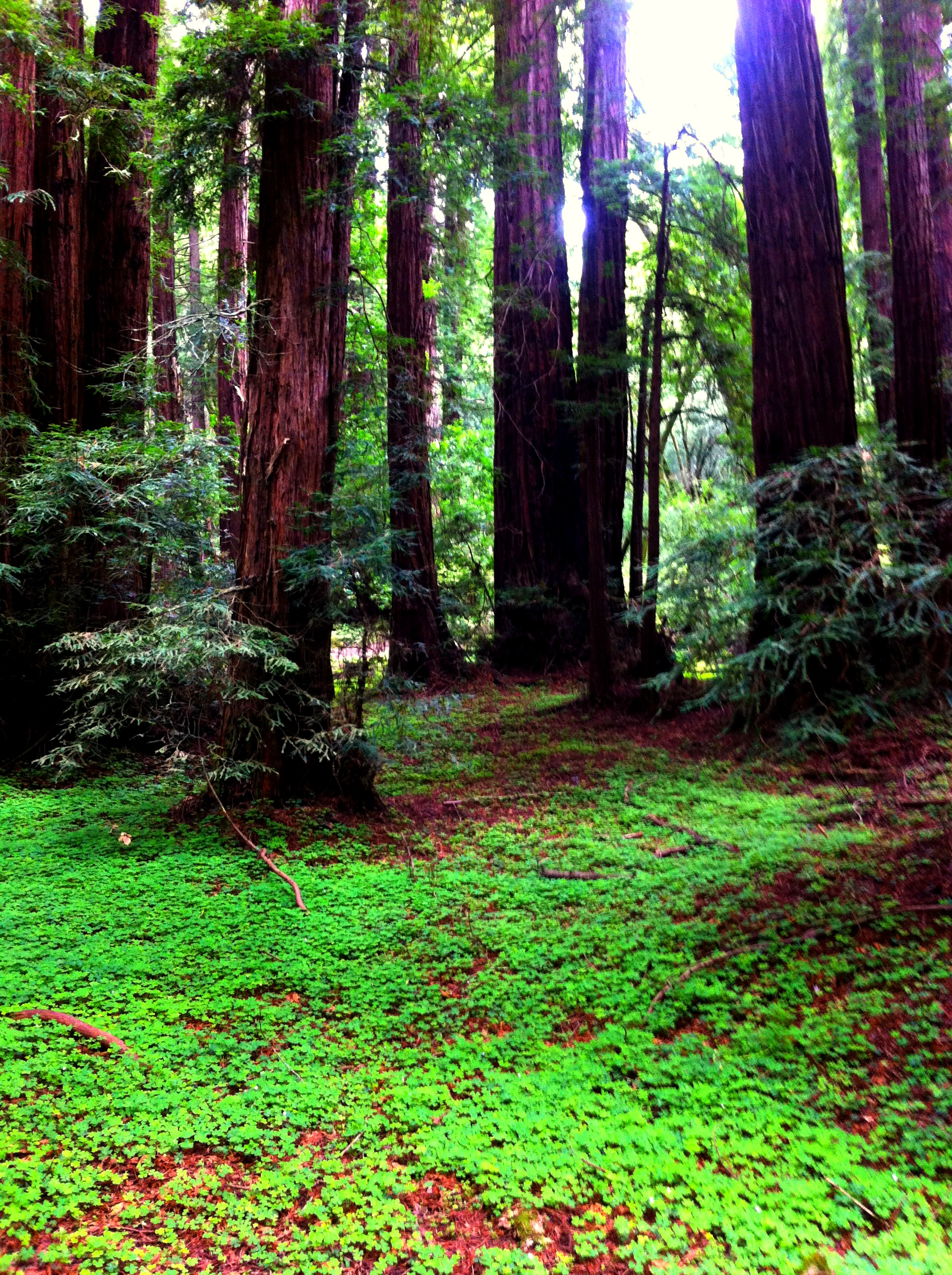 Into Muir Woods ⋆ The World As I See It